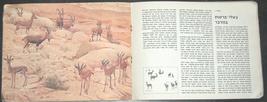Walter Ferguson Guide Mammals Of Israel Children Book Vintage Hebrew Israel 1972 image 4