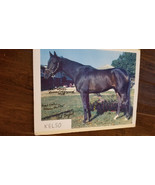 KELSO PHOTO SIGNED AUTO BY JOCKEY ISMAEL VALENZUELA CARL HANFORD ALLAIRE... - $124.99