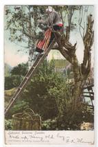 Fruit Picking Leksand Dalarne Sweden 1908 postcard - $5.94