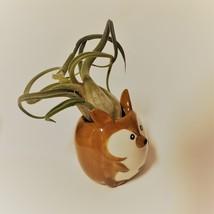"Kangaroo Pot with Curly Air Plant, Ceramic Animal Planter 2"", Live Tillandsia image 7"