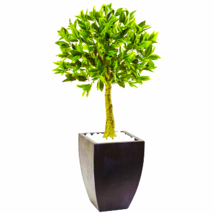 Bay Leaf Topiary With Black Wash Planter UV Resistant (Indoor/Outdoor) - $209.99