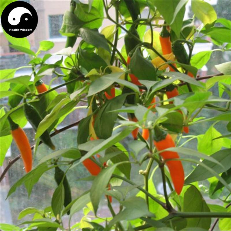 Er vegetable seeds online plant vegetables bell pepper  capsicum grow super chili huang jiao  2
