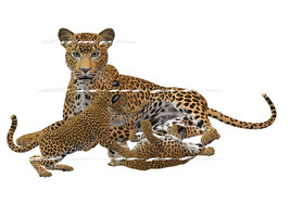 Iron On T-Shirts & Other Fabrics Heat Transfer Graphic ~ Cheetah With Cubs - $7.50+