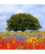 Wildflower Texas Oklahoma Mix Seeds (1oz+Seeds) - $38.21