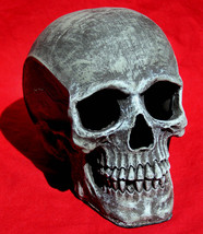 HIGHLY DETAILED 6 INCH TALL HUMAN SKULL COLOR: GREY HALLOWEEN PROP - $12.95