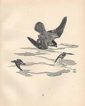 VINTAGE BIRD PRINT ~ PEREGRINE FALCON & DUNLIN - $58.58