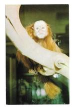 National Zoological Park Rare Red Uakari Monkey Washington DC Postcard - $6.69