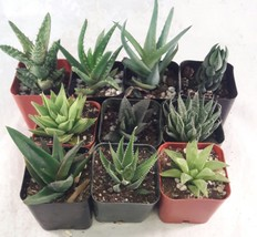 "5 Different Aloe Plants - Easy to grow/Hard to Kill! - 2"" Pots  - $19.48"