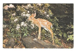 Little Deer Fawn Rhododendron Vintage Posted 1985 Colourpicture Postcard - $3.50