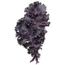 1 Oz Seeds of Scarlet Kale - $74.25