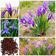 50 Pcs/Bag Chinese Iris Seeds Blue Beautiful Flower Perennial Plant Home... - $4.76