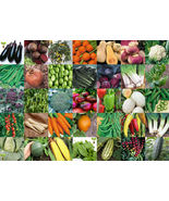 Made in USA 21 Variety Organic Vegetable Seed Pack Set Emergency Surviva... - $23.50