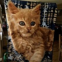 Northwest Company Kitten on Quilt 60x48 Blanket Throw; Soft Plush Blanket - $11.85