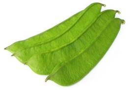 Bean Bush Roma II Non GMO Heirloom Garden Vegetable Seeds Sow No GMO® USA - $4.94+