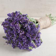 Seeker Blue Statice  Flower Seeds - $8.99