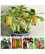 120pcs Banana Seeds,dwarf fruit trees,  delicious rare fruit & vegetable... - $4.99