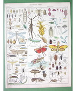 INSECTS Flies Chafers Cicades -- SUPERB Antique Print - $33.66