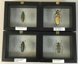 Insect Entomology Lot Collection 36pc Specimen Scorpion Lantern Fly Beetle image 9