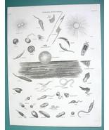 VERMES Parasites Worms Acaris Lingulata etc - (2) Two 1820 ABRAHAM REES ... - $12.24