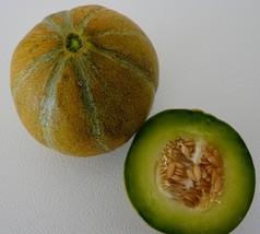 Ha'Ogen Israeli Anchor Heirloom Non-GMO Green Melon Garden Fruit 30 Seeds - $8.11
