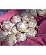 Romanian Red Garlic Bulbs Organically Grown (1/2 Lb Culinary) - $7.92
