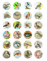 "birds eggs vintage maps clipart digital download collage sheet 1.5"" circ... - $3.99"