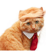 Pet Dog Cat Trump Style Cat Wig Pet hair Costume Head Wear Apparel Toy f... - £18.29 GBP