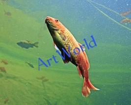 Digital download,Fish,Photography,Christmas decor wall,Printable,Home wa... - $4.50