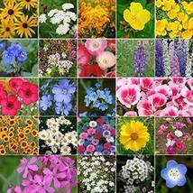 Non GMO Bulk Coastal California Wildflower Seed Mix 23 Species of Wildflower See - $4,073.85