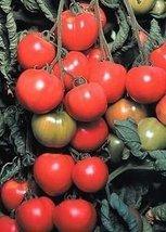 20 Seeds Early Choice Hybrid Tomato - $25.74