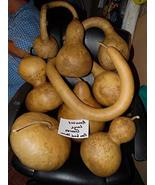 10 Seeds of Huge Mix of Seeds from Large Gourds - Cucurbitaceae - $13.70