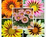 Ia rigens bonsai rare flower bonsai plant popular africa bonsai for diy home 1  1  thumb155 crop