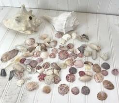 Lot of Seashells 2 Conch Small Sea Shells various sizes box8 - $26.48