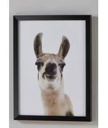 Llama w/Black PS Frame & PVC Cover - $29.99
