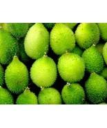 50 Spine gourd Seeds, Momordica dioica OR Kantola Seed, kakrol seed online - $19.00