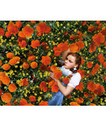 Wizard of Oz Poster 24x36 inches Dorothy Asleep in the Poppy Field Judy ... - $39.99