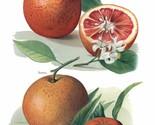 Vintage Fruit Prints: Blood Orange - Fruit Growers Guide - 1880