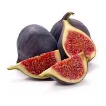 "Live Starter Plant  ""Beer's Black"" Fig Fruit Tree ""Ficus Carica"" Garden ... - $50.99"