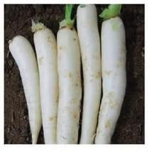 100+ Daikon Radish Seed Pack. Garden Planting, Jar Planting or Microgreens - $7.49