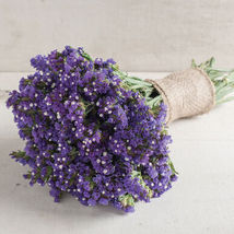 Seeker Blue Statice Seed,Statice Flower Seeds - $21.00