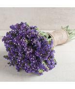 Seeker Blue Statice Seed,Statice Flower Seeds - $21.00