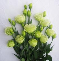 100pcs Lisianthus Bonsai plant Lisianthus Flower (7), HZ Beautiful Flowe... - $8.89