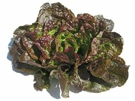 Bronze Mignonette Lettuce Butterhead Seeds - 100 Count Seed Pack - Non-GMO - A H - $2.99