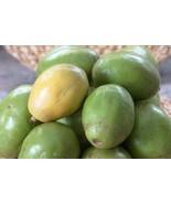 5 Seeds Spondias Mombin Hog Java Plum Makok - Rare Tropical Plant Tree S... - ₹271.71 INR