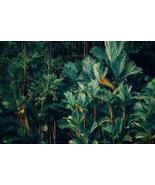 Panama Hat Palm Tree Seeds   Palm Tree Seeds   5 seeds - $15.32