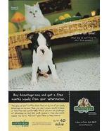 Boston Terrier Puppy Persian Kitten 1999 Photo AD - $10.99