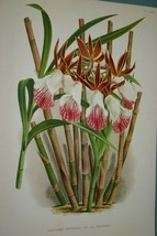 9 Lindenia Orchid Limited Edition of 1000 Prints Collectible Designer Wa... - $94.99