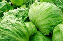 2000 Seeds Iceberg Lettuce Seeds, Lactuca Sativa, NON-GMO - $4.95