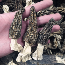 Wild Morchella Whole Dried Mushrooms 1 kg (35.27 oz) - $889.00
