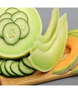 CUCUMBER MELON FRAGRANCE OIL - 4 OZ - FOR CANDLE & SOAP MAKING BY VIRGIN... - $9.07